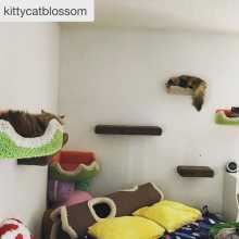 Cat wall system