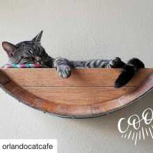 Cat sleeping in wall mounted wine barrel bed from CatsPlay Cat Furniture