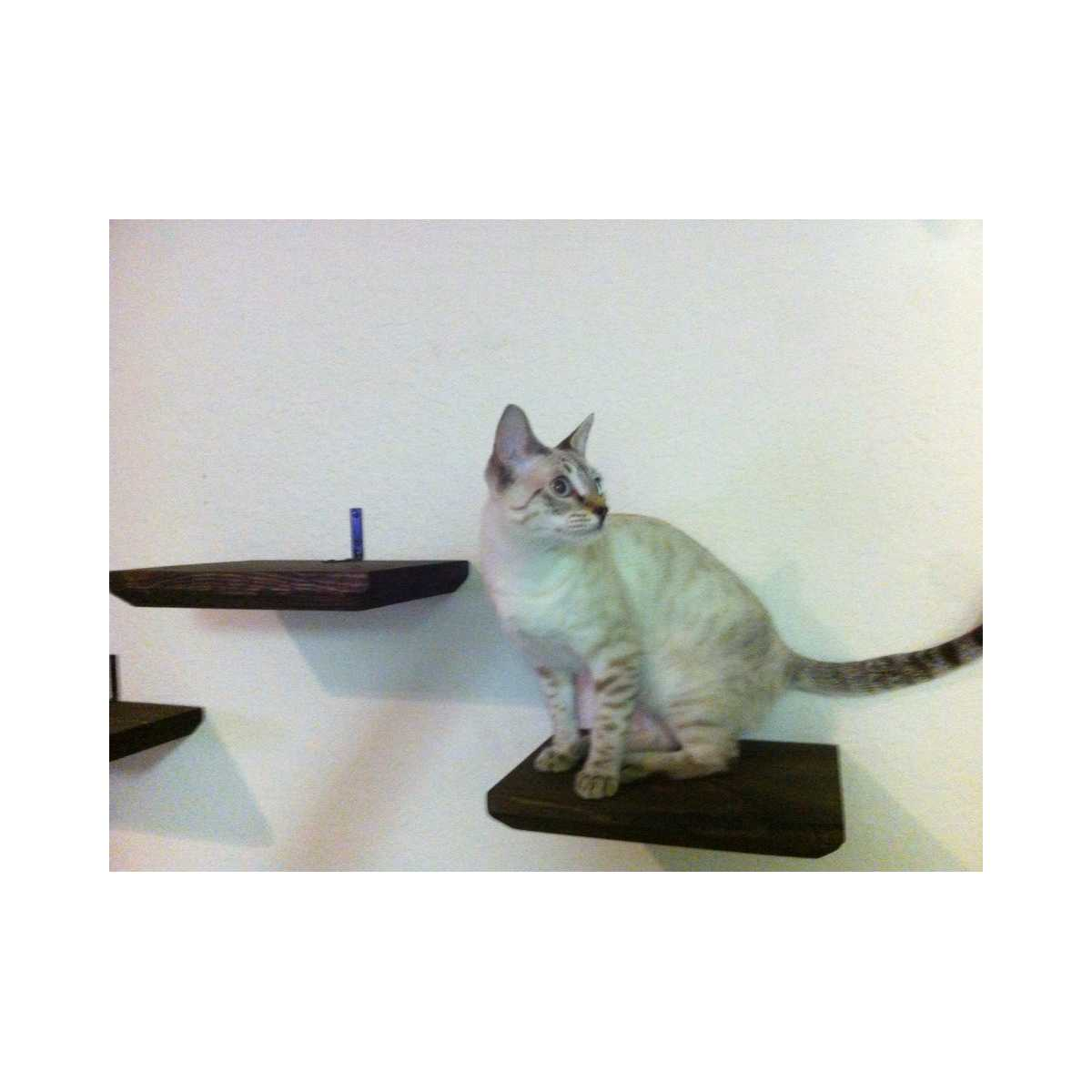 Catastrophicreations Stained Wooden Cat Wall Shelf