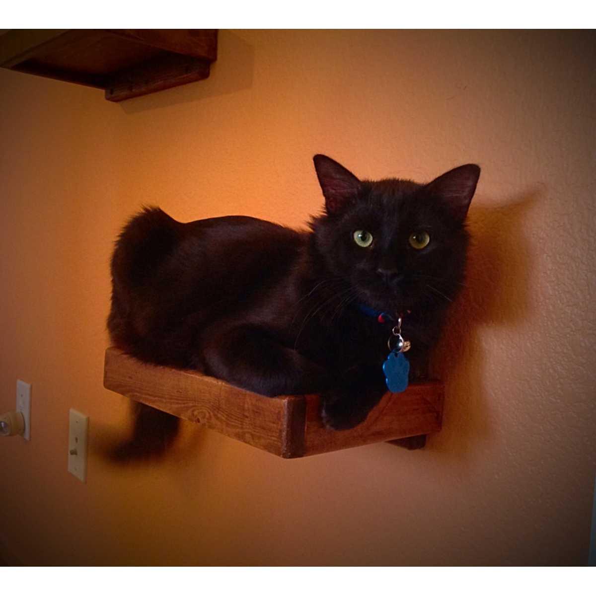 Artisan Made 4 Floating Cat Wall Shelves 1 Floating Cat Wall Bed Catwallshelves Superstore