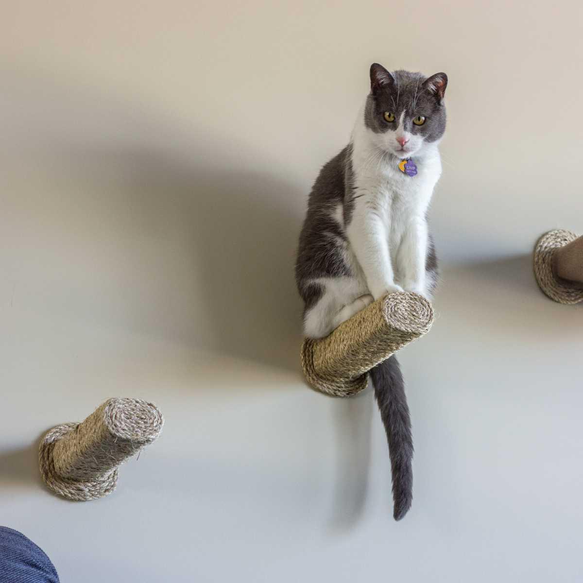 sisal step cat scratching post wall mounted catwallshelves superstore. Black Bedroom Furniture Sets. Home Design Ideas